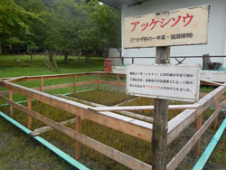 bakokutaiji034.jpg