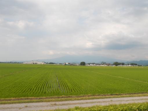 inaho-6.jpg