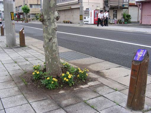 kamegaoka04.jpg