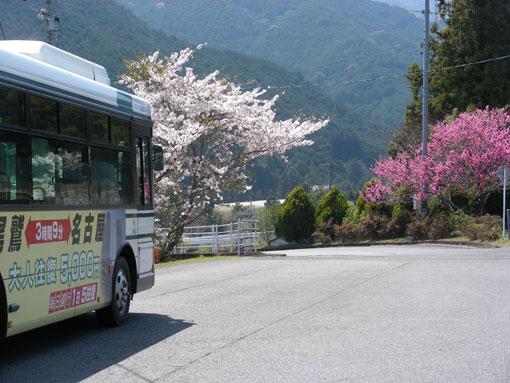 kamisunohana10.jpg