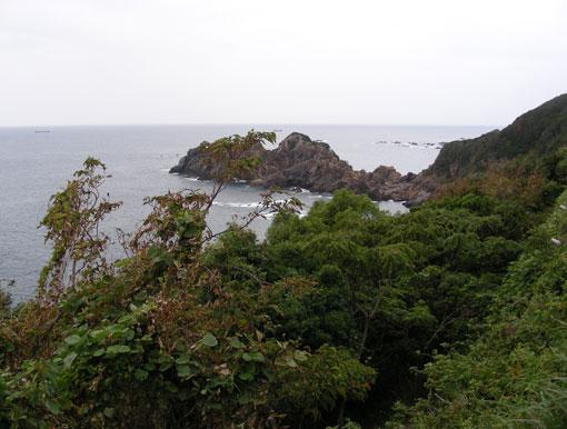 koishinohana02.jpg