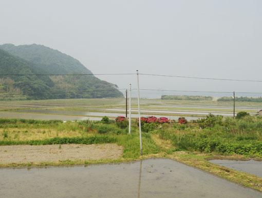 ohosakihana04.jpg