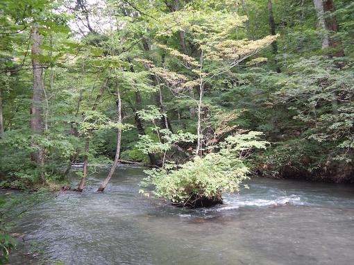 oirasegawa-5.jpg
