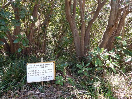 senbasaki08.jpg
