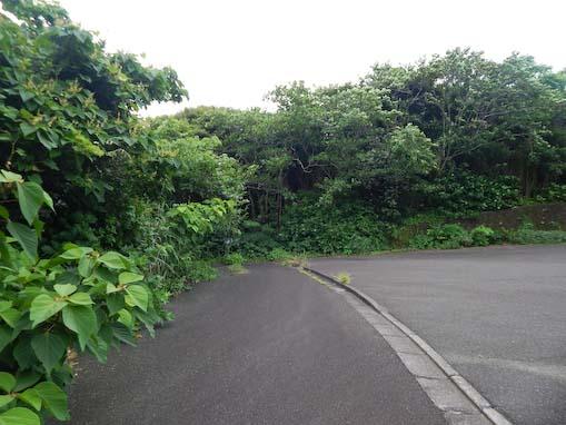 tsurunemisaki-12.jpg