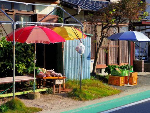 bshikanoshima13.jpg