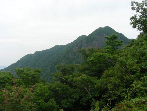 oshimawashihana04.jpg